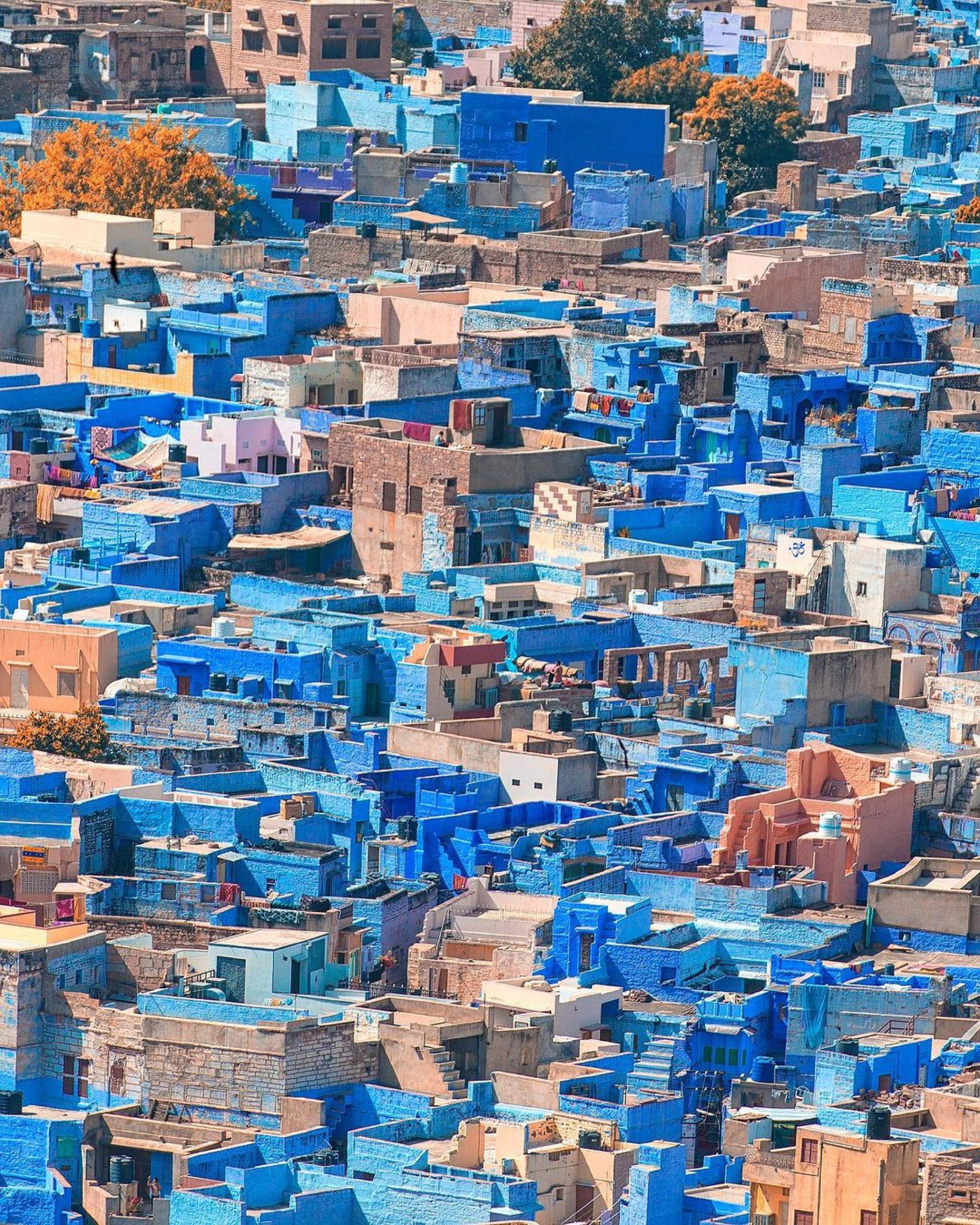 pexels-sharvan-saran-6473833